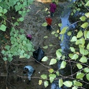 Young volunteers work to clean up nearby streams during the 2011 Ocmulgee Alive!